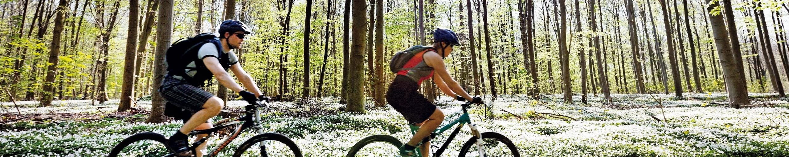 Two people riding mountain bikes in the forrest.
